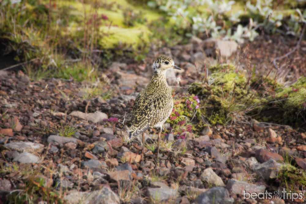 Islandia Skaftafell viajar a Islandia a tu aire por libre trekking Islandia Svartifoss