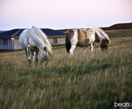 Islandia alojamiento barato Hellnar Arnarstapi Islandia viajar por libre