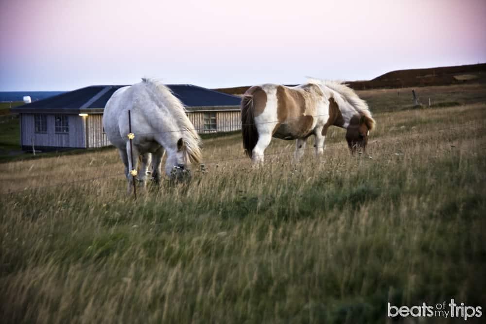 caballos islandeses comer peninsula Snaefellsnes barato Hellnar Arnarstapi Islandia