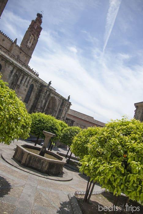Naranjos plaza catedrales Plasencia Extremadura