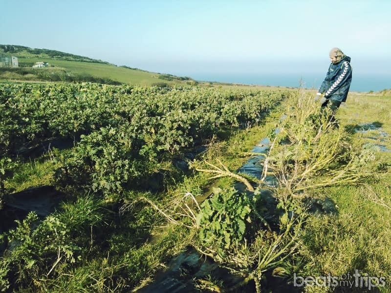 trabajar granjas mundo
