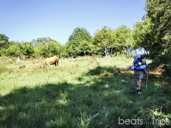 Consejos para hacer el Camino de Santiago de Compostela Camino francés peregrinaje Ruta Jacobea Hacer el Camino