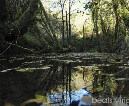 Cardiff visitar Brecon Beacons parque natural actividades aire libre naturaleza cascadas