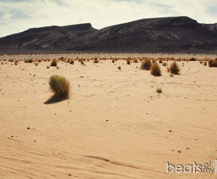Desierto Negro de Marruecos