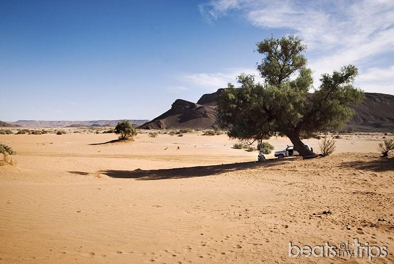 desierto tamarindo
