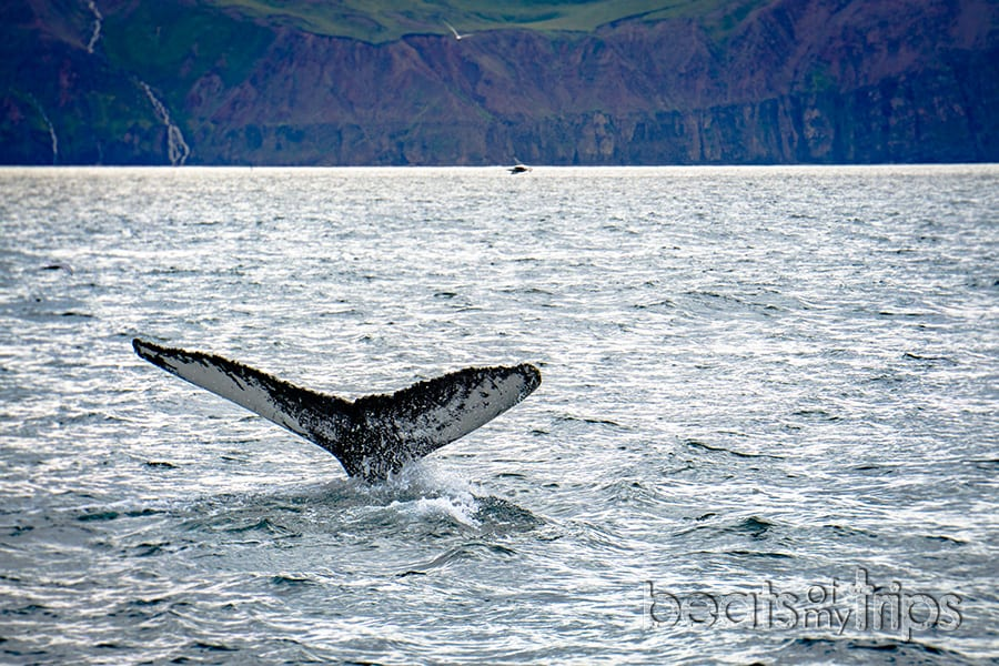cómo son ballenas Islandia qué ver excursión barco Husavik