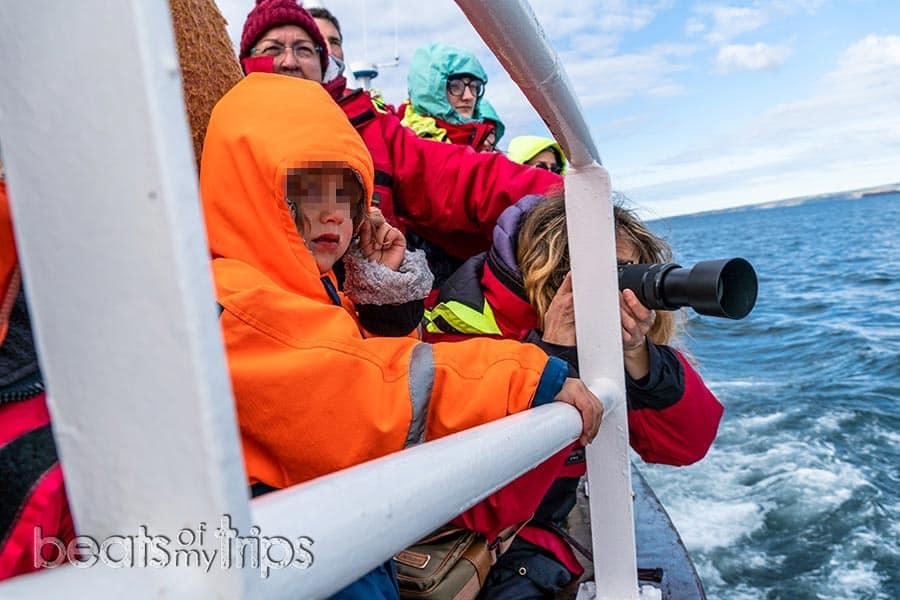 barco excursión ver ballenas Islandia Husavik delfines pico blanco