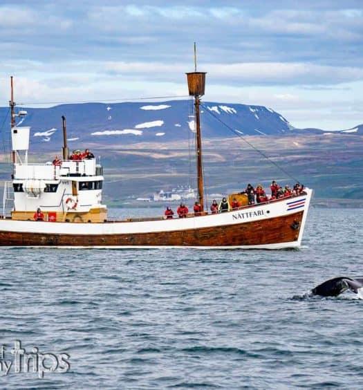 ver ballenas islandia whale watching husavik que ver islandia cuándo excursión invierno verano