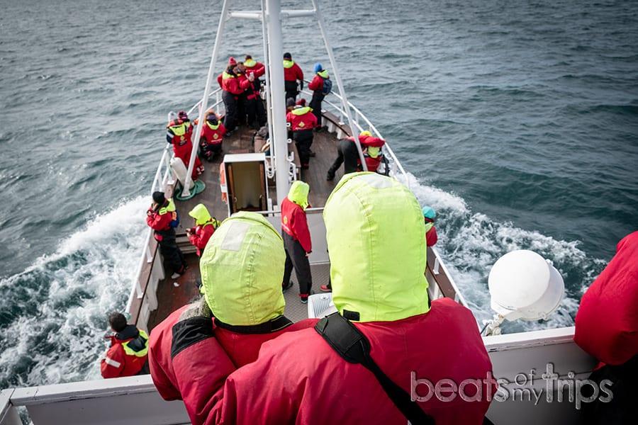 Islandia whale watching ver ballenas cómo dónde cuándo