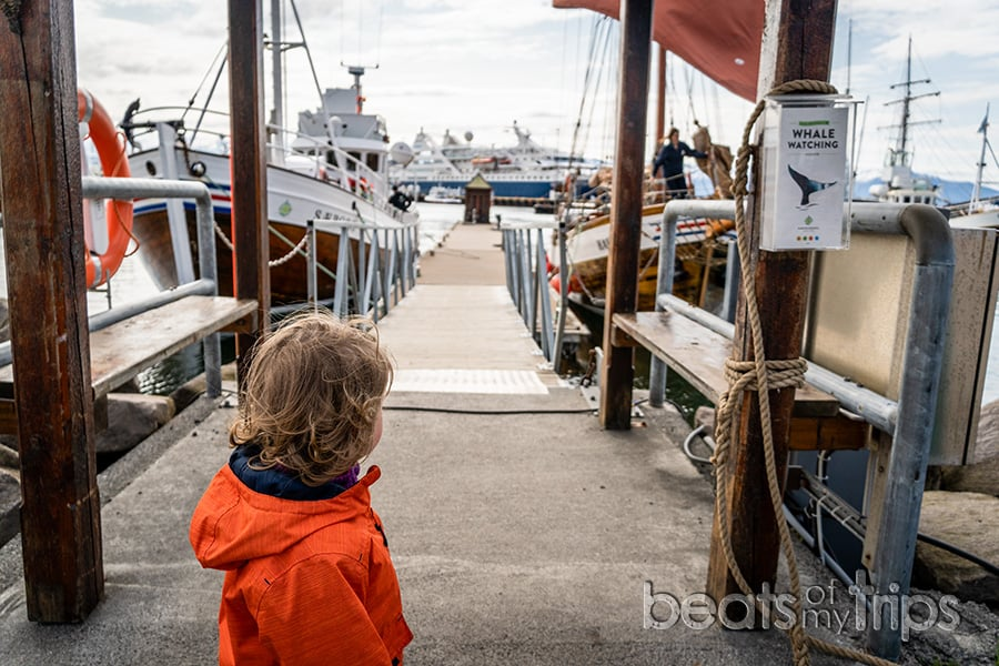 Husavik whale watching avistamiento cómo barcos compañía excursión Islandia