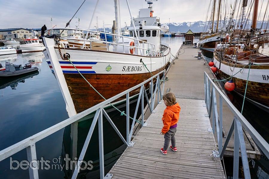 barcos tradicionales excursión ver ballenas Islandia qué ver