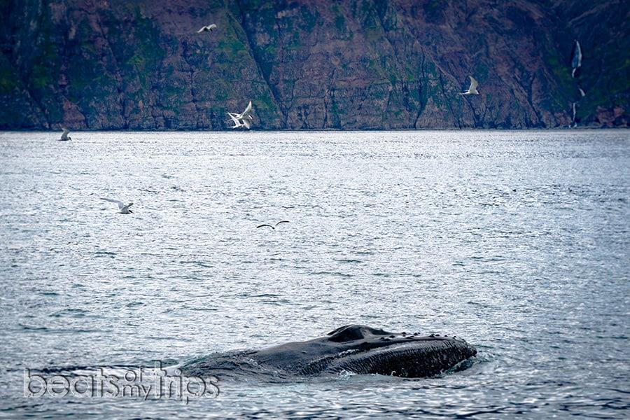 ver ballenas Islandia husavik qué ver qué hacer